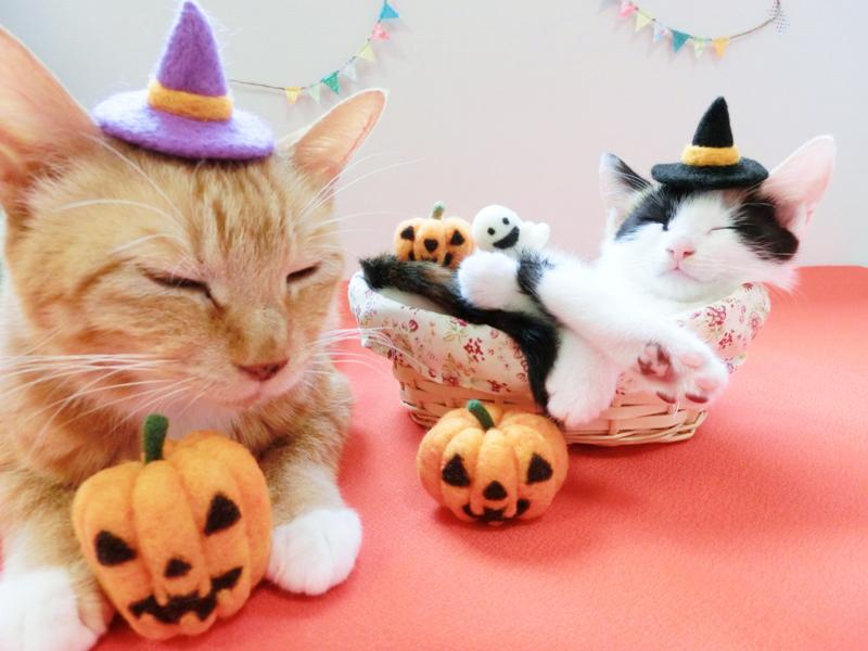 猫のハロウィン仮装